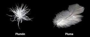 qué es relleno de pluma